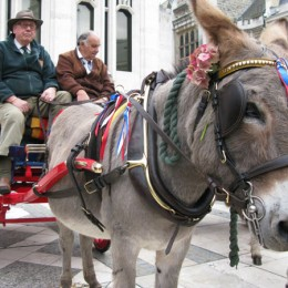 A donkey at the Costermonger Harvest Festival in London