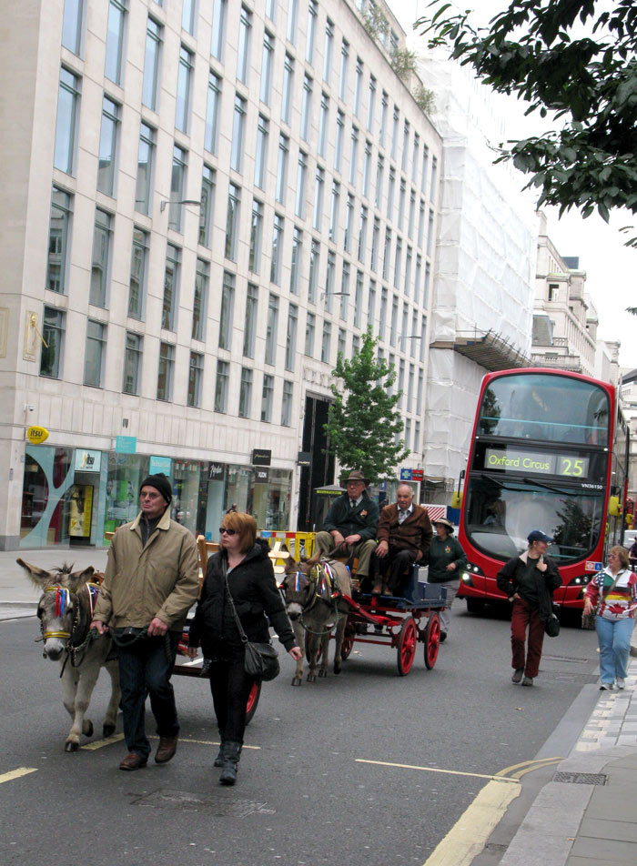 Donkey-in-London-red-bus