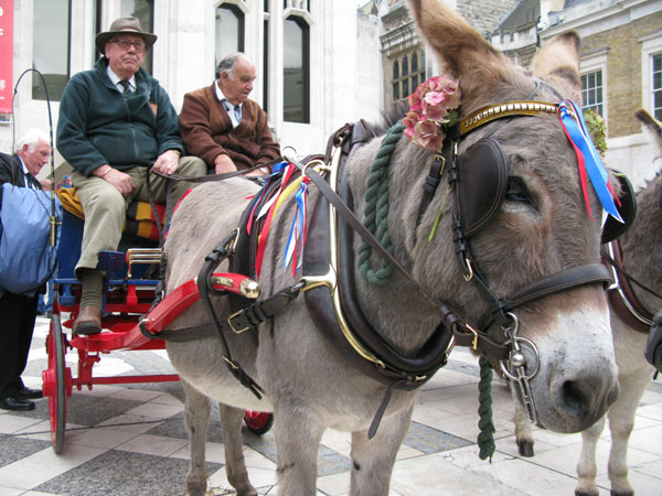 Donkey-in-London