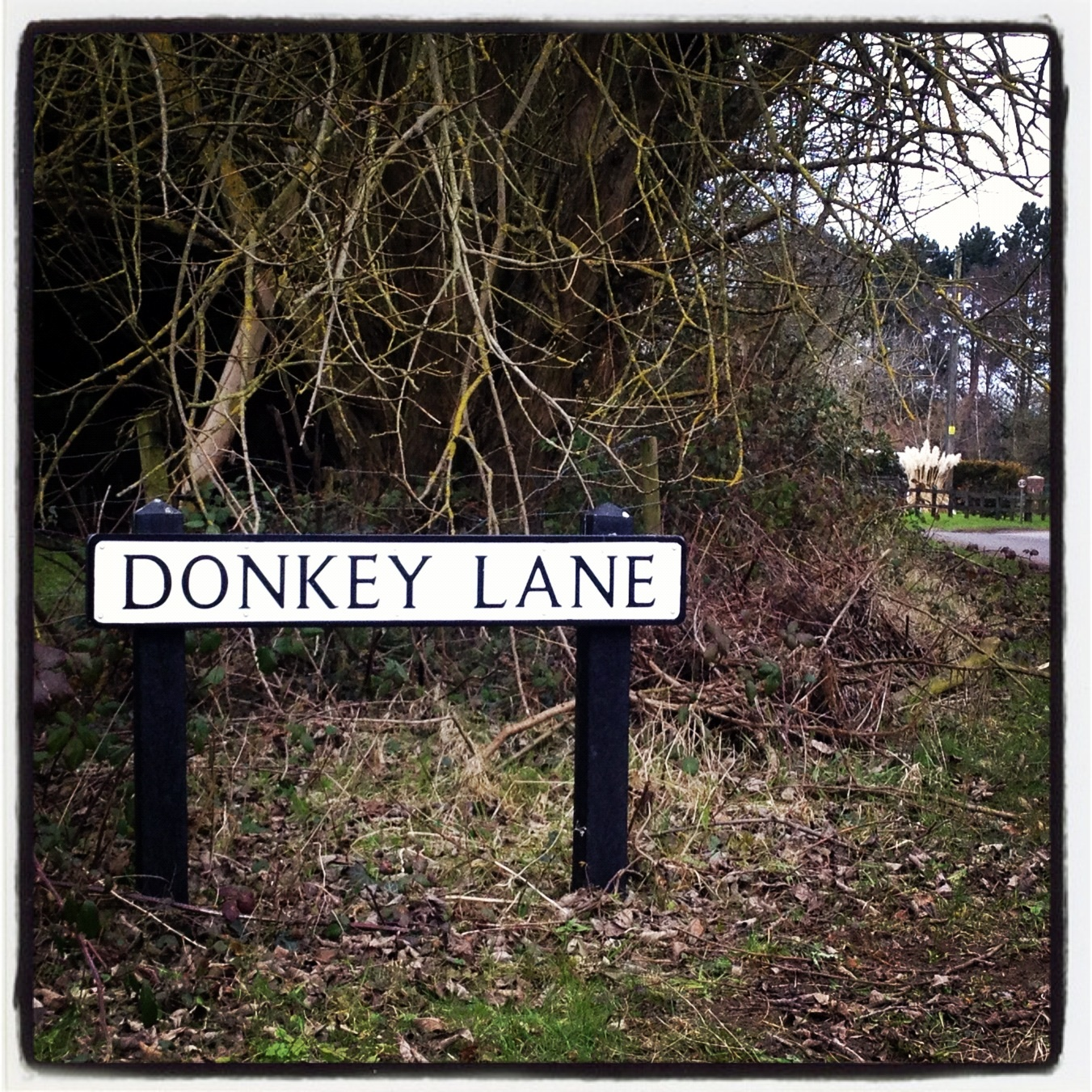 Looking for a donkey, suppose I must be on the right track...