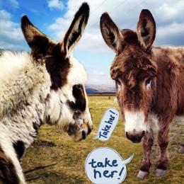 The donkey shortlist