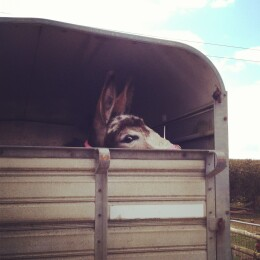 I own a donkey!