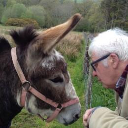 Quiet mind, quiet donkey