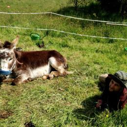 Life, death and donkeys