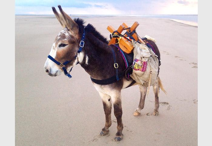 Seaside-Donkey