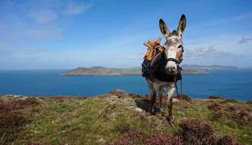 Self-islanding with a donkey